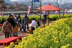 堤防には菜の花約100万本が咲き乱れ、来場者は春の訪れを楽しんでいた。