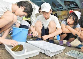 匹見川で採取した水生昆虫を分類する参加者