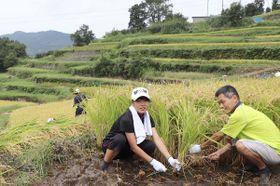 稲刈りに取り組む棚田のオーナーら=香川県小豆島町中山