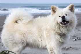 「ブサカワ」で人気を集めた秋田犬「わさお」