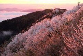 枝にびっしりと張り付いた霧氷=午前6時ごろ、剣山頂上付近(頂上ヒュッテ提供)