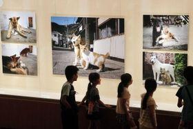 犬と猫のツーショットなどが並ぶ会場=姫路市書写