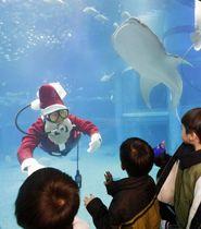 ジンベイザメ(右上)が泳ぐ「海遊館」の水槽に登場した「サンタダイバー」=10日午後、大阪市