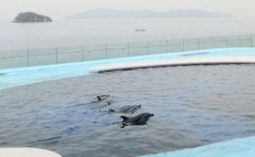 瀬戸内海を背景にイルカが観賞できる「海豚プール」=香川県宇多津町、四国水族館