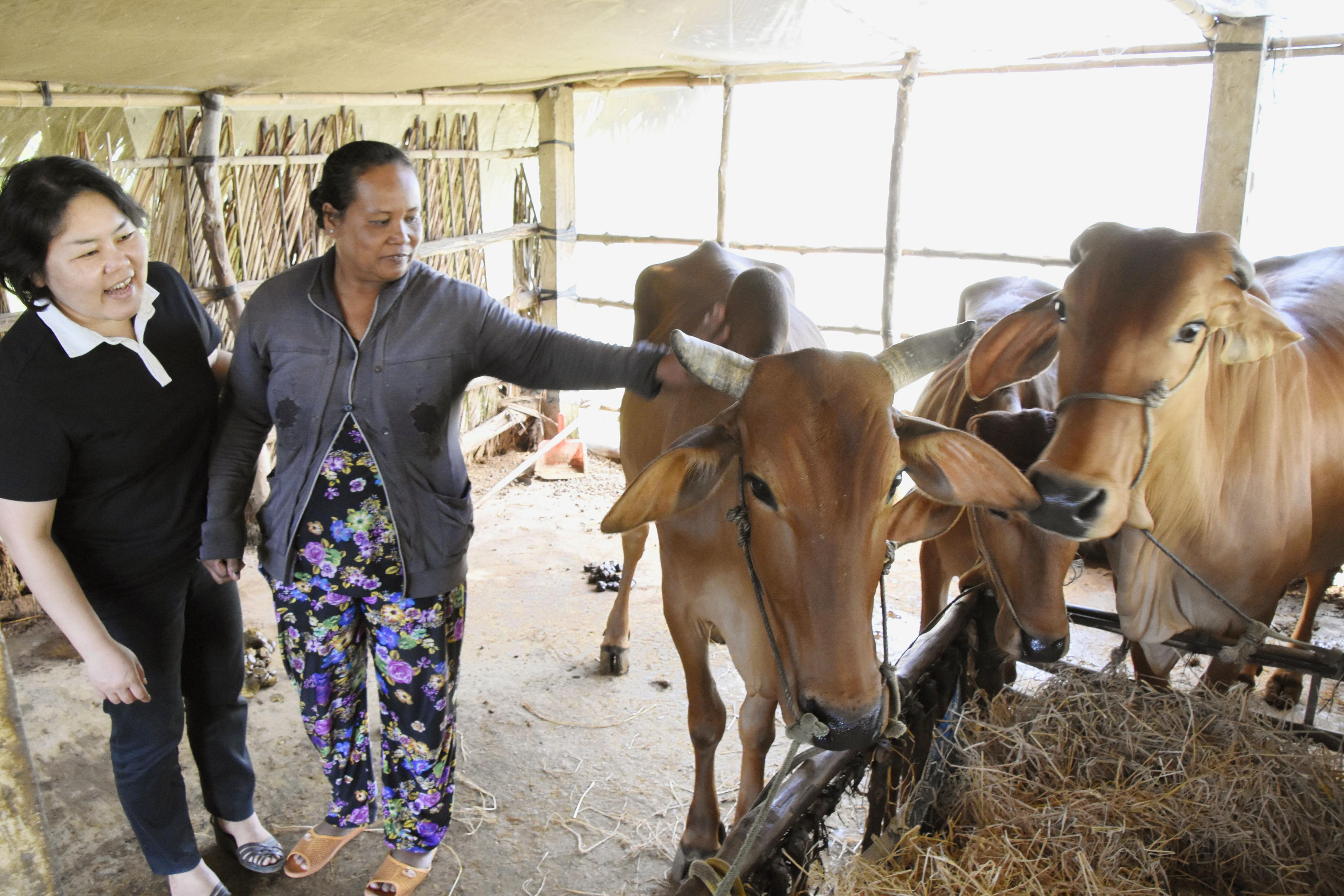 「牛銀行」を利用した農家を訪ねる伊能(左)。現在では3頭の牛を飼育するまでになった農家の女性は伊能を「楽しい人で、村の中ではいつも話題に出てくる」と語る=ベトナム南部ベンチェ省タインフック村