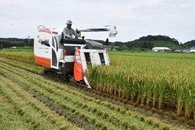 串間市で始まった超早場米の稲刈り