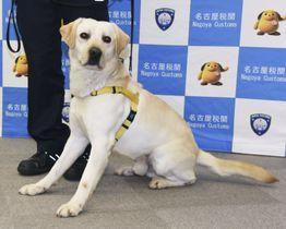 大麻に反応した麻薬探知犬「ケイスケ号」=26日午後、愛知県常滑市