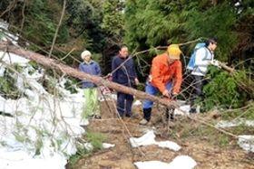 雪の重みで道に倒れた木を片付ける参加者たち=丹波市春日町中山