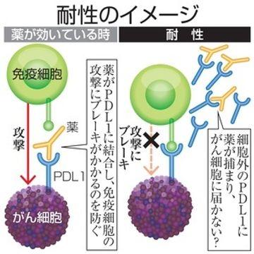 がん免疫療法の耐性解明 治療変更で効果も