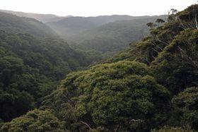 世界自然遺産の推薦範囲にある沖縄本島北部の「やんばるの森」