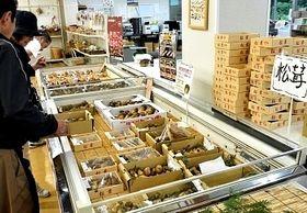 たてしな自由農園のキノコ販売コーナー。マツタケや雑キノコが並び始めた