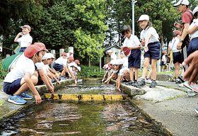 家康が涼を取った伝説が残る湧き水池からの流水に触れる児童=浜松市天竜区二俣町の鹿島八幡宮