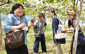 ブドウ狩りを楽しむ参加者=長井市中伊佐沢・安部ぶどう園