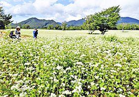 一面に白い花が咲き誇るソバ畑=26日午後、南会津町高杖原