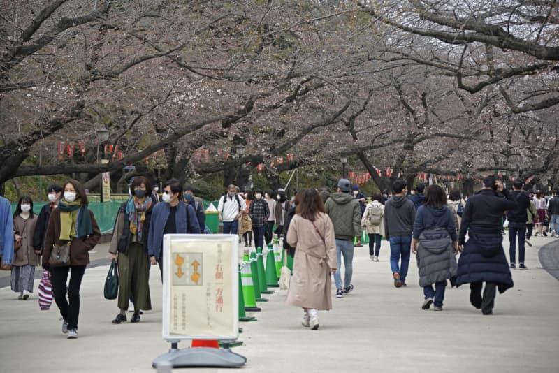 東京・上野公園の桜並木。通路を仕切り、片側通行にするなどの感染対策が取られる=20日午後