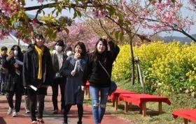 「このはなウォーク」の河津桜と菜の花が咲き乱れた堤防で、春の訪れを楽しむ来場者
