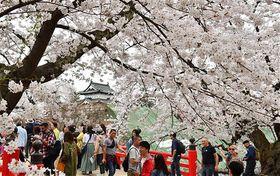 園内のソメイヨシノが満開となり、花見客でにぎわう下乗橋=24日、弘前公園