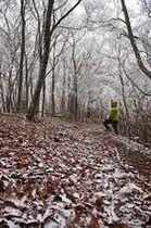 落ち葉にうっすらと積もった雪と樹氷(19日、和歌山県田辺市龍神村龍神で)