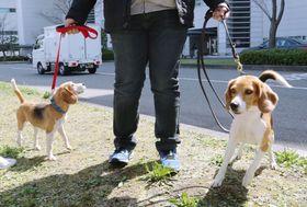 台湾から福岡空港に到着したヒアリ探知犬=23日午前、福岡市