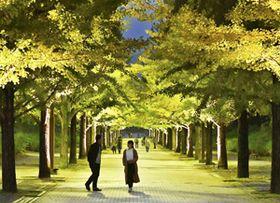 ライトアップが始まったあづま総合運動公園のイチョウ並木=福島市
