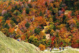 ジロウギュウと剣山を結ぶ登山道から望める、鮮やかに色付いた剣山の山肌=那賀町岩倉のジロウギュウ山頂から