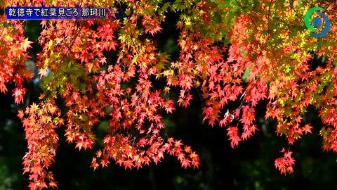 那珂川の古刹、乾徳寺で紅葉見頃