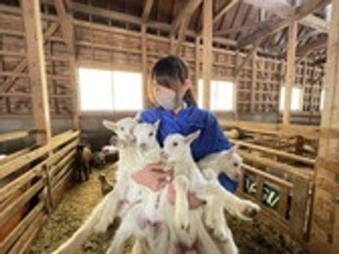 誕生したばかりのヤギを抱える担当スタッフ=富士宮市内野のまかいの牧場
