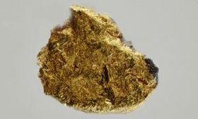 初山別鉱と留萌鉱を含んでいた砂金。大きさは1ミリ程度(東京大物性研究所提供)