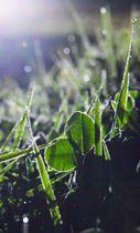 夜の冷え込みでうっすらと草むらに降りた霜=22日午後8時53分、盛岡市薮川
