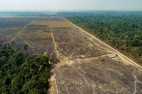 ブラジル・アマゾンの森を焼き払ってつくられた牛の放牧場。急速な森林破壊が動物由来感染症拡大の一因とされる(AP=共同)