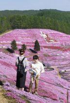 オホーツク海に近い北海道大空町の「芝桜公園」で、満開となったシバザクラの丘を散策する観光客=19日午後