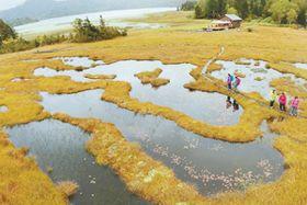 尾瀬の池塘を縁取る黄金色の草紅葉。後方は尾瀬沼=22日午前10時15分ごろ、檜枝岐村・尾瀬国立公園
