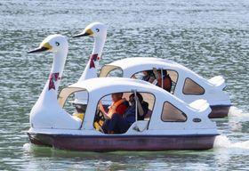 「足こぎスワン世界大会」で、スワンボートをこぐ参加者=21日、相模原市の相模湖
