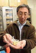 永明寺山公園で採取し、標本になったアンズタケを手にする山田准教授=南箕輪村の信州大農学部