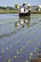 川内川の水を張った田んぼに植えられる苗=伊佐市菱刈川北