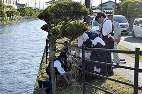 岸に引き上げたニホンカモシカを取り押さえる警察官ら=22日午後4時47分、十和田市元町西1丁目の稲生橋近く