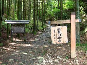 日本遺産に認定された「旅人たちの足跡残る悠久の石畳道」の構成資産の一つ、箱根旧街道