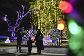 福島県富岡町の「夜の森」地区で始まった桜並木を彩るイルミネーション=1日夜
