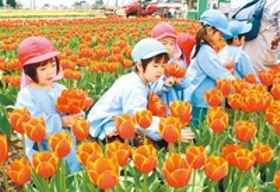 咲き誇る花に笑顔 砺波の観光圃場で地元園児が摘花体験