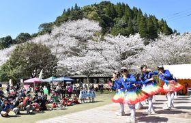 満開の桜に囲まれて開幕した花立公園さくらまつり