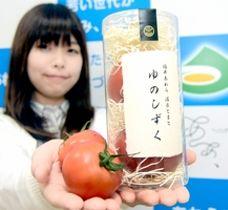 あわら温泉の源泉水で育てたトマト「ゆのしずく」=6日、福井県あわら市役所