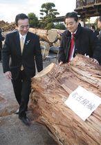 競り落とされたヒノキを見る鈴木・浜松市長(左)と河村・名古屋市長=浜松市浜北区で