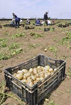 田野町の大野台地で農家らとジャガイモを収穫する若者たち