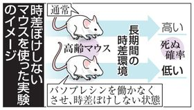時差ぼけしないマウスを使った実験のイメージ