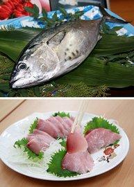 人工産卵から養殖し、日本で初めて出荷されるスマ(上)。下は「全身トロ」と呼ばれるスマの切り身