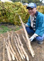 掘り出した自然薯を手に取る南川自然薯研究会のメンバー=香川県さぬき市大川町