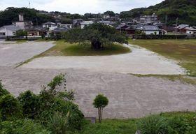 さら地の旧玉林小学校跡地。シンボルツリーのアコウの木が立つ=南さつま市笠沙町片浦
