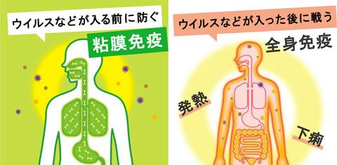 粘膜免疫と全身免疫の違い