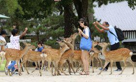 国の天然記念物「奈良のシカ」と観光客=10日、奈良市の奈良公園