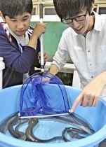 試食会に向け、東京に届ける養殖ウナギの準備作業を進める生徒=福島高